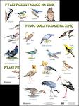 Plansza Ptaki odlatujące na zimę Ptaki pozostające na zimę