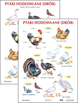 Plansza Ptaki hodowlane